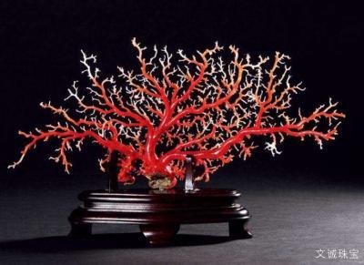 天然红珊瑚多少钱一克,2020年红珊瑚价格一般多少钱一克