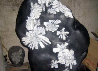 纹理石:菊花石的产地,种类,特征,图片,简介